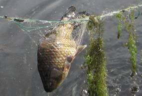 Браконьеры и рыбинспекция: что будем делать?