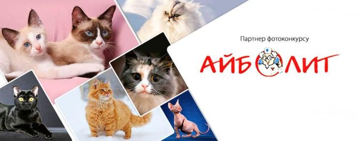 Конкурс «Найкращий кіт». Перемогли Муся, Рижик і Мурчик
