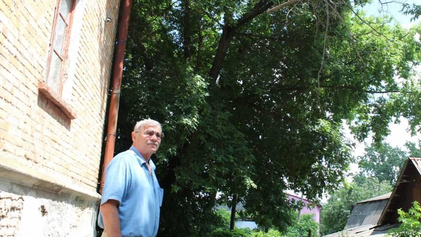 Хто обрізає дерева? На Городецького вже рік висить гіляка на дротах