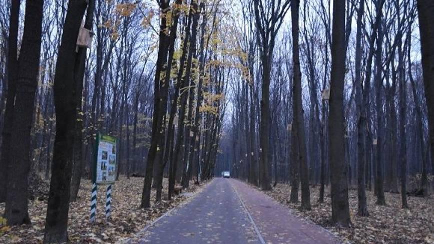 У Лісопарку завершують капремонт другої алеї. Там буде освітлення та Wi-Fi