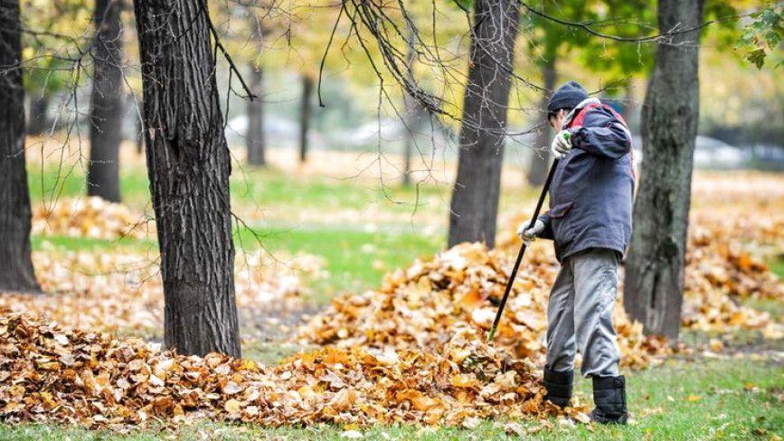 Як у вас прибирають листя? Вінничани про роботу двірників