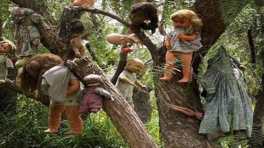 Моторошна знахідка: у Жмеринському районі невідомі розвішали на дереві старі ляльки