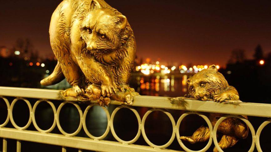 На Київському мосту поповнення. Там оселилася родина єнотів