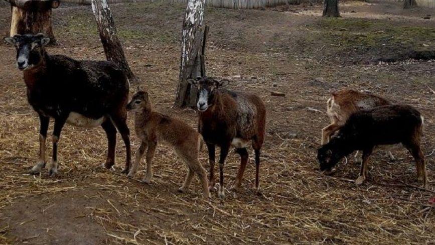 Бебі-бум у Подільському зоопарку: з початку року з'явилося п'ять малюків