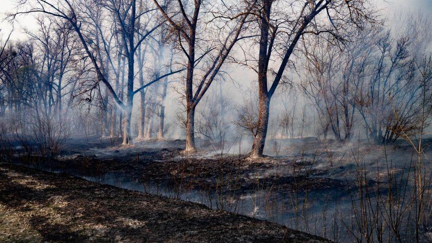 За три місяці 2020 року згоріло стільки ж трави й лісу, як за весь 2018 рік (Прес-служба «Інтер»)