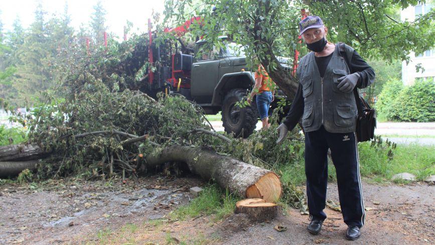 Конфлікт сусідів на Порика. Через зрубані дерева пенсіонер збирається йти до суду