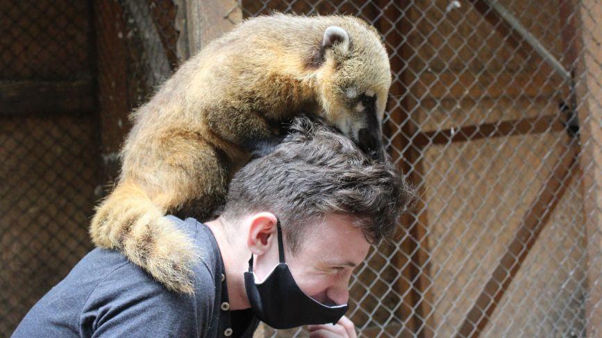 «Готуємо вольєр для сурикатів»: посткарантинне життя вінницького міні-зоопарку