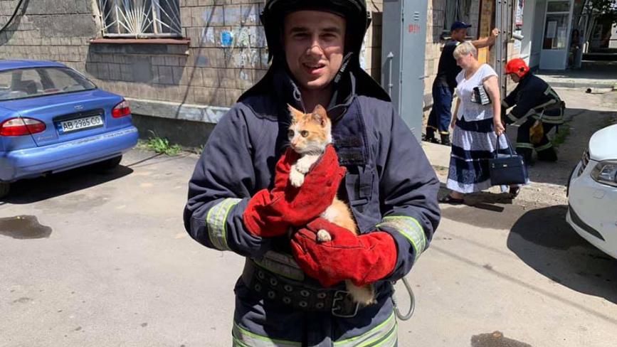 У Жмеринці кіт випав з вікна та потрапив у пастку. Звільнили тварину рятувальники