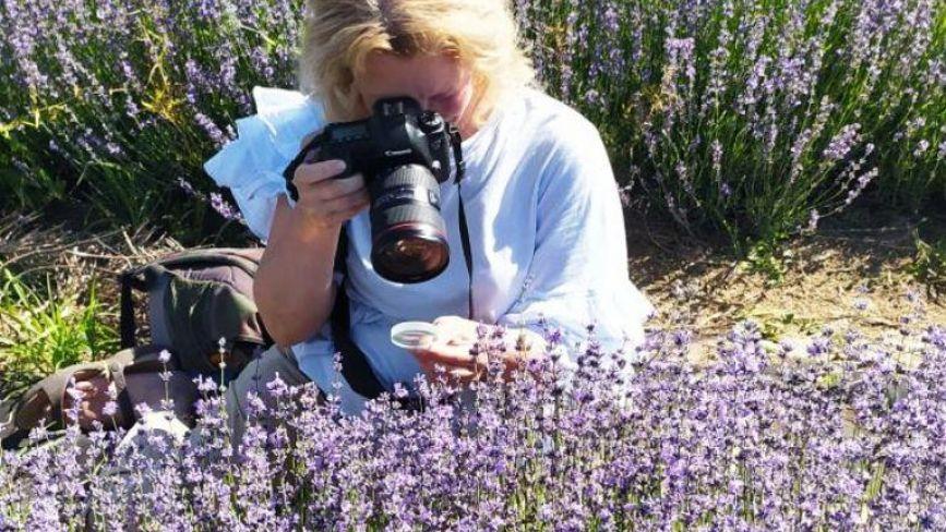 «Ніби хтось розлив парфуми».  У Ладижині цвіте лаванда — беріть розсаду і заробляйте гроші