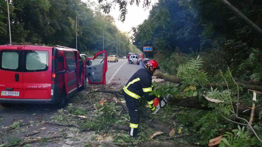 На Львівському шосе під час руху на мікроавтобус впало дерево