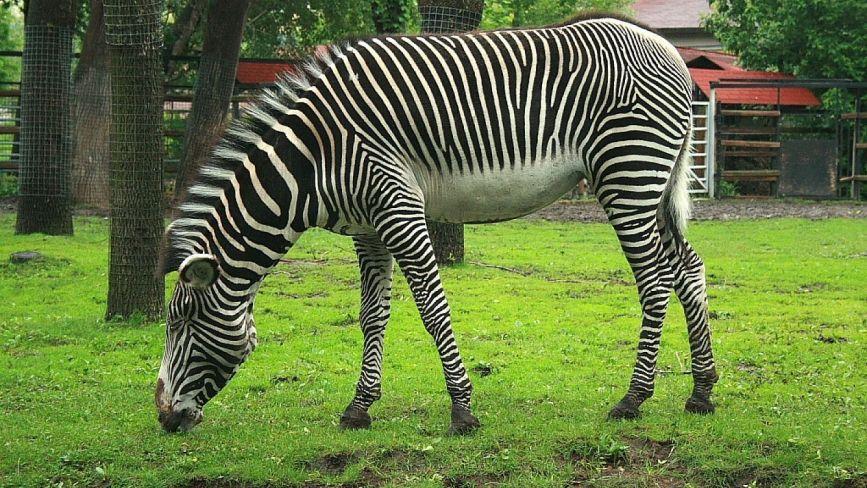 Дедалі більше компаній і підприємців стають опікунами для вихованців Подільського зоопарку
