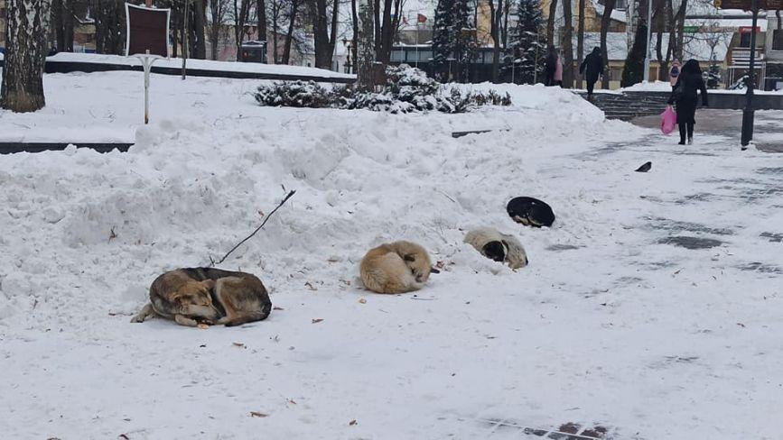 ФОТО ДНЯ. У Вінниці потерпають від холоду безпритульні собаки