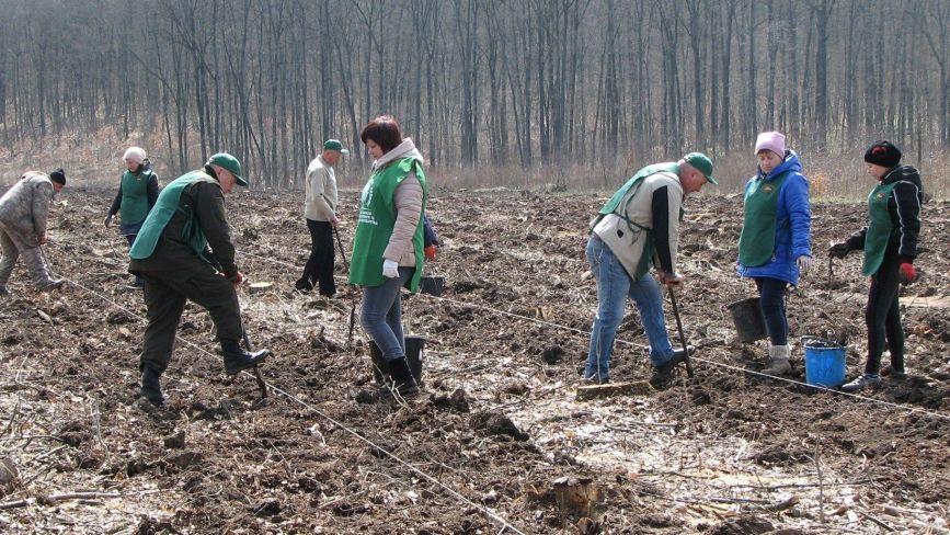 Екологічний рекорд: протягом дня на Вінниччині висадили понад 200 тисяч молодих дерев