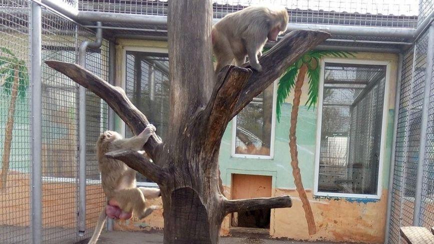 Приматів та сурикатів з Подільського зоопарку перевели у відкриті вольєри