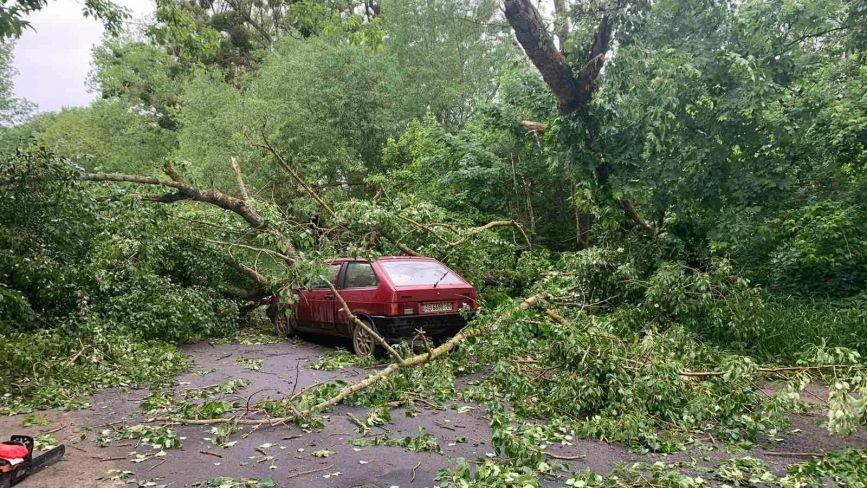 Негода в області. У Жмеринці вітер повалив дерево на авто