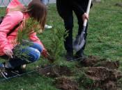 Як у місті посадити дерево? «Зеленбуд» обіцяє, що допоможе