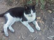 """У Вінниці АТОвець загубив кота-""""розвідника"""". Той відгукується на кличку """"Псих"""""""