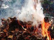 За паління листя чи сміття вінничанам загрожує до 1700 гривень штрафу