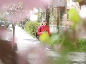 «Справжнісінька Японія»: у Вінниці зацвіли сакури