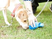 Хто має контролювати правильний вигул тварин та які штрафи за порушення