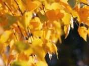 «Дуже контрастний місяць»: синоптики розповіли про погоду в жовтні