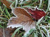 Погода на тиждень: місцями в Україні очікуються заморозки та дощі