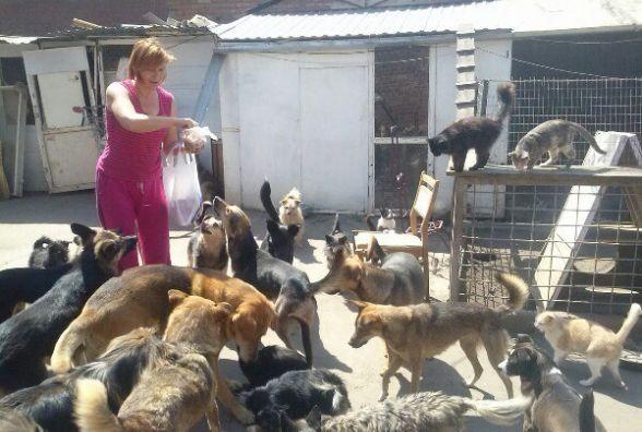 Вінничанка самотужки піклується про 58 безпритульних тварин