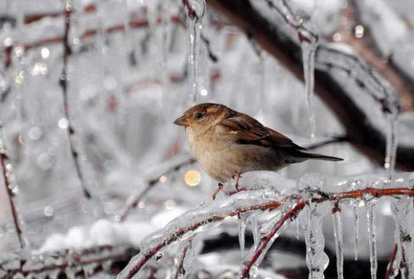 На Різдво до нас прийдуть сильні морози. Вінничани, готуйтеся
