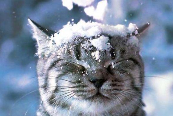 Погода у Вінниці на сьогодні, 11 січня