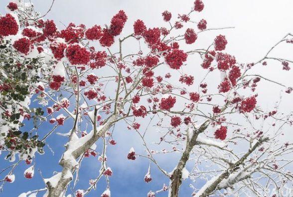 Погода на сьогодні: на Вінниччині переважно сніг, температура до -10