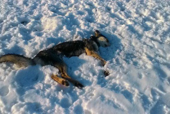 Полювання на домашніх улюбленців: у Стрижавці застрелили трьох собак(ФОТО)