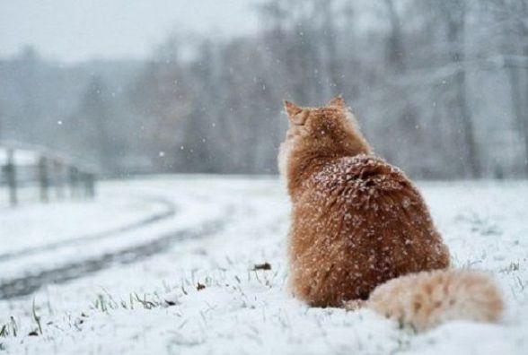 Погода у Вінниці на сьогодні, 23 січня