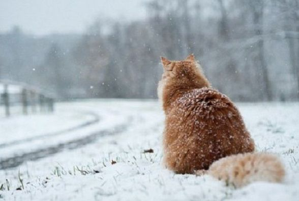 Погода у Вінниці на сьогодні, 13 лютого