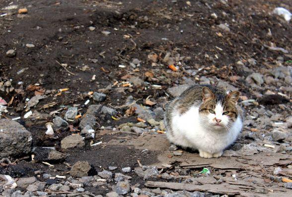 """А за вікном майже весна"""": березневі коти на вулицях міста. ФОТО ДНЯ"""