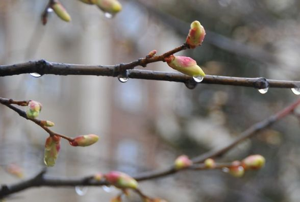 З суботи, 11 березня, на Вінниччині похолодає та почнуть йти дощі