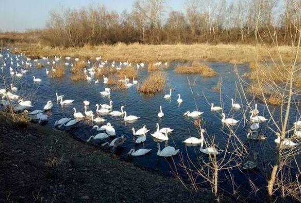 Сьогодні, 11 березня, — «Пташиний день». Хлопцям варто оминати красивих дівчат