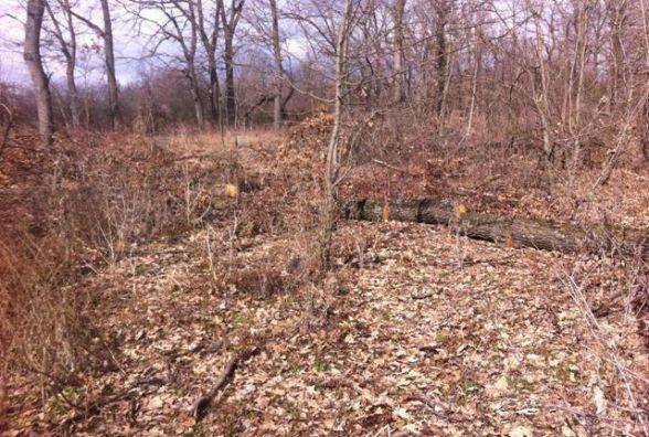 На території колишньої військової частини незаконно вирізали дерева