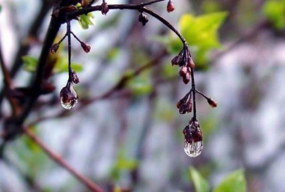 Заморозки та +20: Синоптик попередила про «неправильну» погоду в кінці квітня