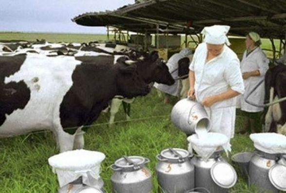 Вінниччина на першому місці в Україні по виробництву м'яса і молока