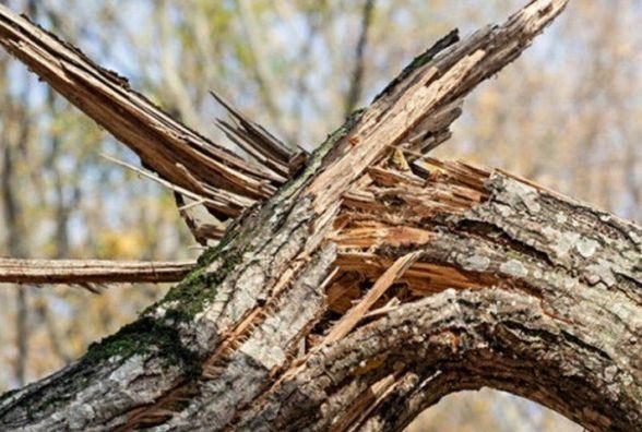 """Результат пошуку зображень за запитом """"повалене дерево"""""""