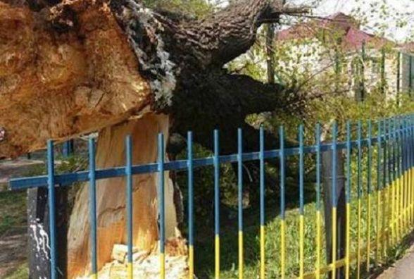 Школяр на якого впало дерево отримав перелом плеча. Поліція взялась розслідувати інцидент