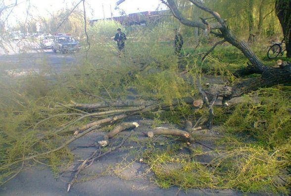 У Козятині на авто, що їхало по дорозі, впало дерево. ФОТО