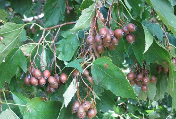 На симпозіумі юних ботаніків вивчали реліктові породи дерев  і рідкісні рослини Поділля