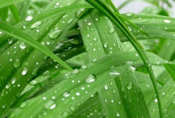 Сьогодні у Вінниці вітряно та мокро. Прогноз погоди