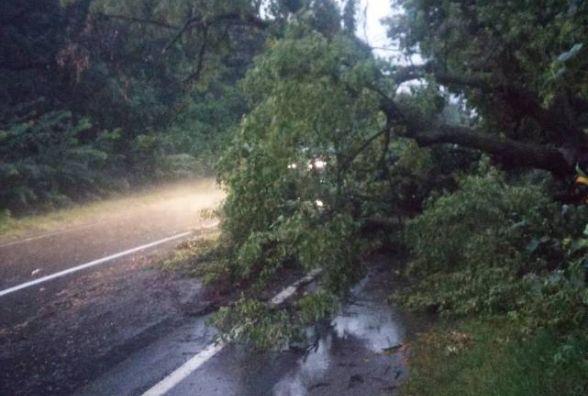 Рятувальники двічі за добу розчищали трасу від повалених дерев