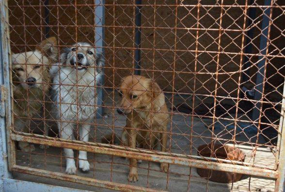 Вінничани хочуть щоб створили службу по вилову безхатніх собак