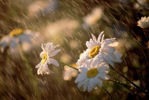 Погода в Україні на ці вихідні: спека послабне, підуть дощі