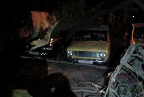 Буревій в Вінниці: вночі на Космонавтів повалене дерево завалило кілька автівок