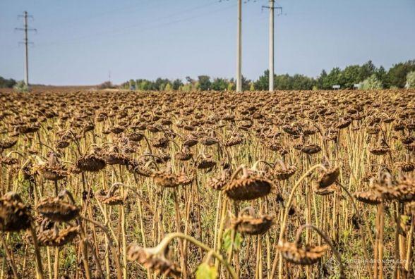 Більше двох тисяч гектар сої та соняшника постраждало в наслідок стихії
