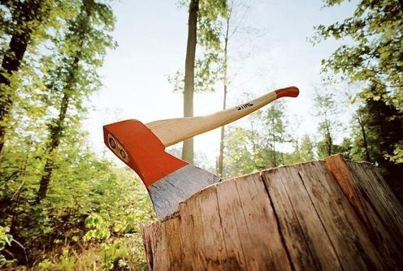 Два лісники заплатили хабар, щоб чиновник «закрив очі» під час перевірки